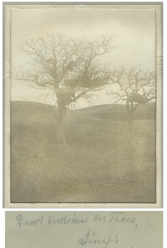 drums-story-20-burial-tree